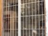 Barreaux de sécurité pour vitrine